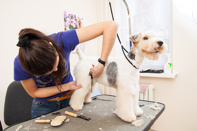 mobile pet grooming doral